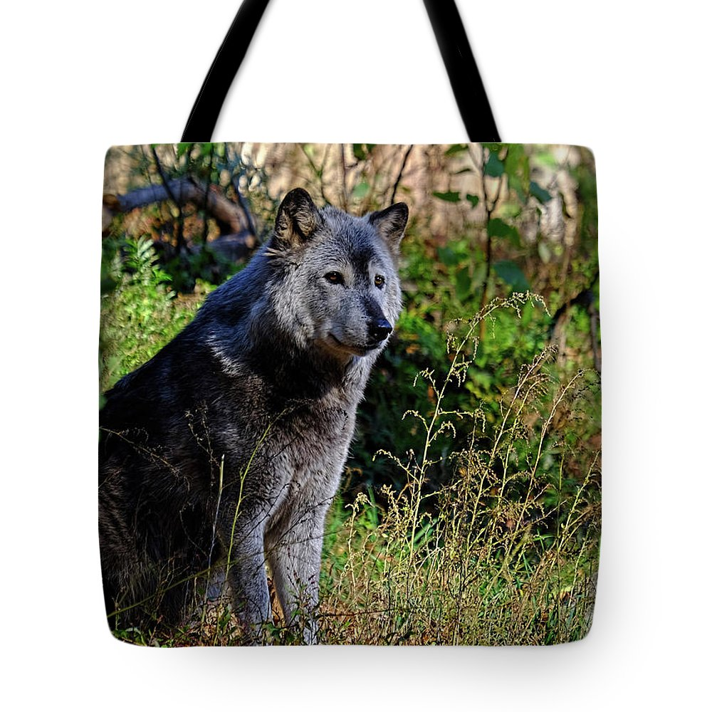 Gray Wolf Tote Bag featuring the photograph Gray Wolf by Ronda Ryan