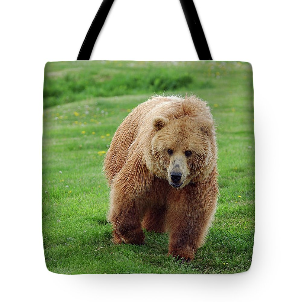 Ursus Arctos Grizzly Brown Bear Wild Tote Bag featuring the photograph Grizzly Bear Approaching In A Field by Reimar Gaertner