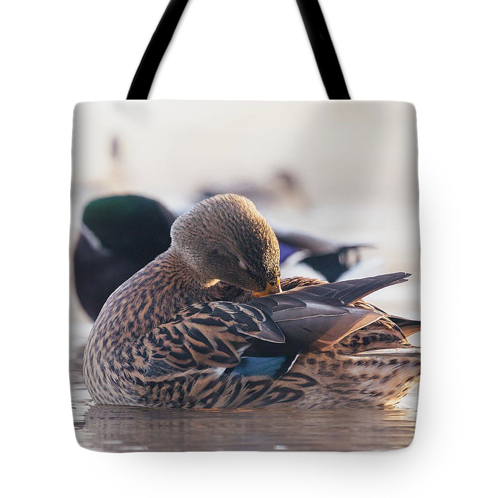 Bird Tote Bag featuring the photograph Grooming by Annette Bush