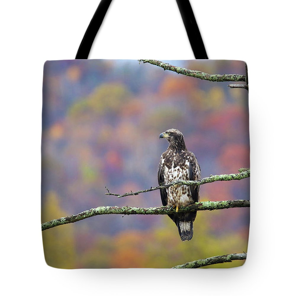 Bald Eagle Tote Bag featuring the photograph Groovie Juvie by Brook Burling