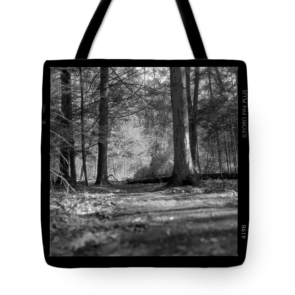 Trees Tote Bag featuring the photograph Ground Floor by Jean Macaluso