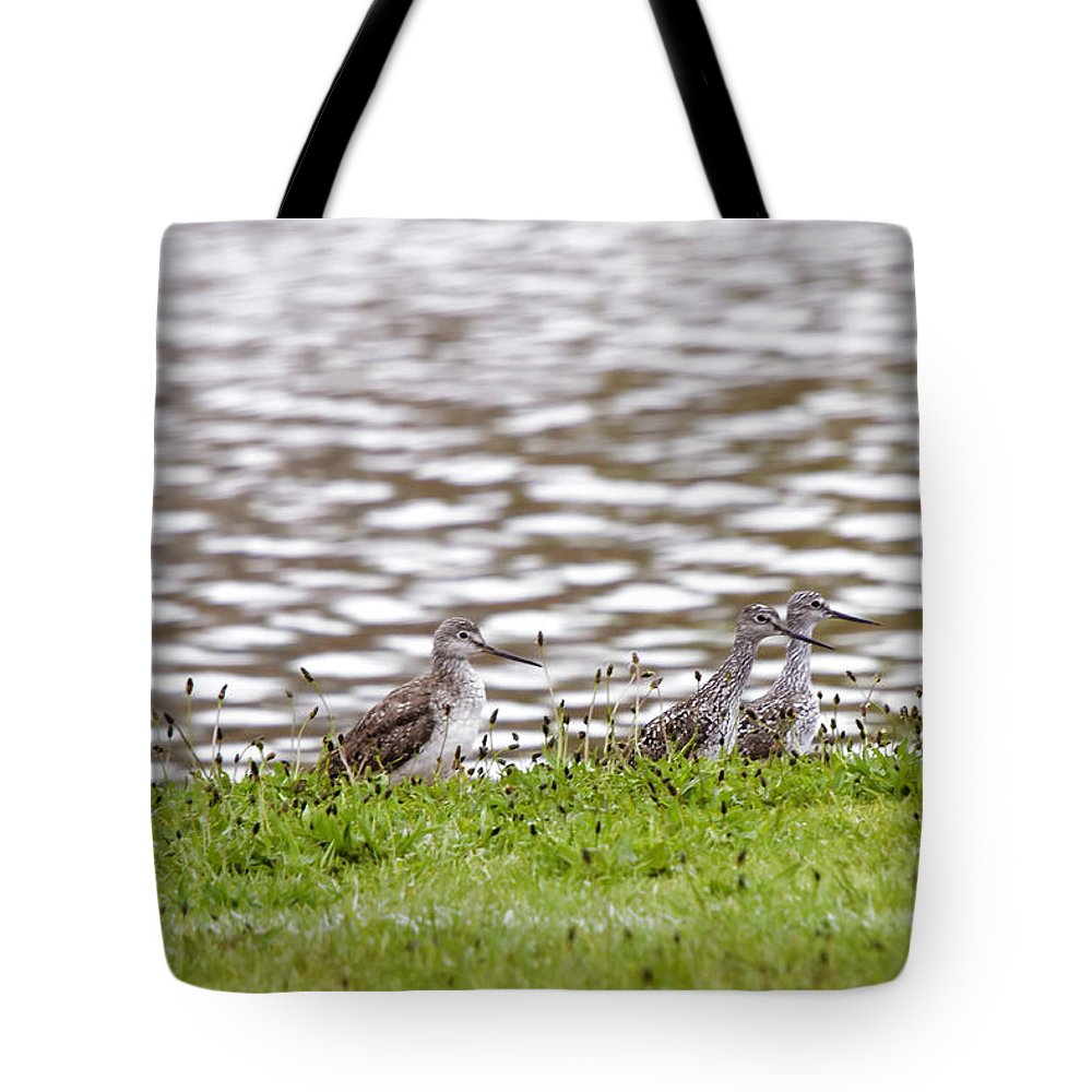 Sand Pipers Tote Bag featuring the photograph Group Shot by Donald Crosby