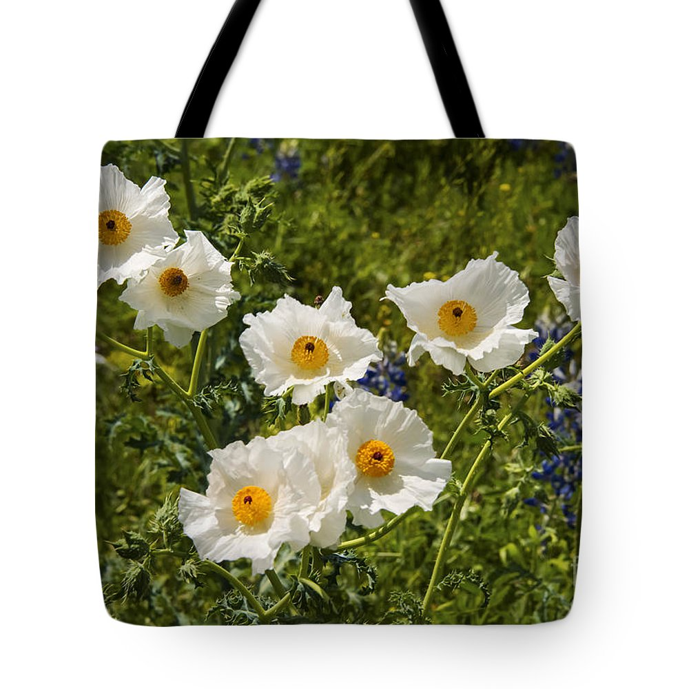 Fredericksburg Texas White Poppy Poppies Bloom Blooms Flower Flowers Spring Bud Buds Hill Country Tote Bag featuring the photograph Groupies by Bob Phillips