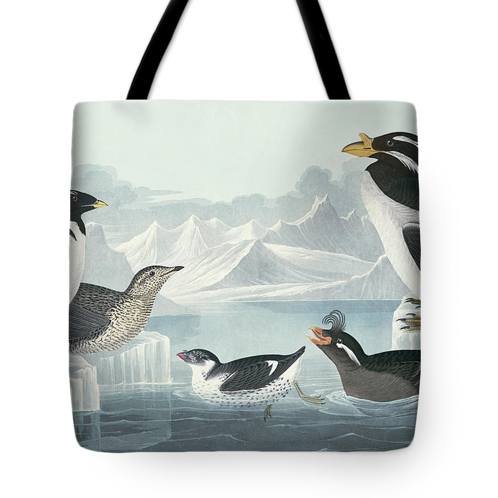 Black-throated Guillemot Tote Bag featuring the painting Guillemots And Auks by John James Audubon
