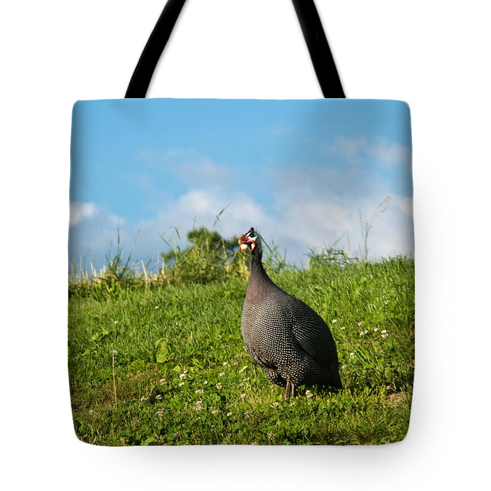 Galliformes Tote Bag featuring the photograph Guineafowl Searching by Douglas Barnett