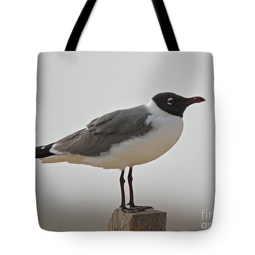 Gull Tote Bag featuring the photograph Gull by Kathy Russell