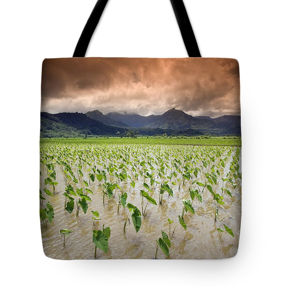 30-csm0101 Tote Bag featuring the photograph Hanalei Taro by Dave Fleetham - Printscapes
