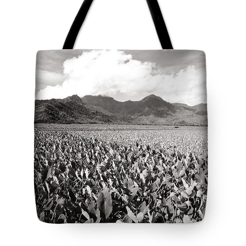 Afternoon Tote Bag featuring the photograph Hanalei Taro Fields by Bob Abraham - Printscapes