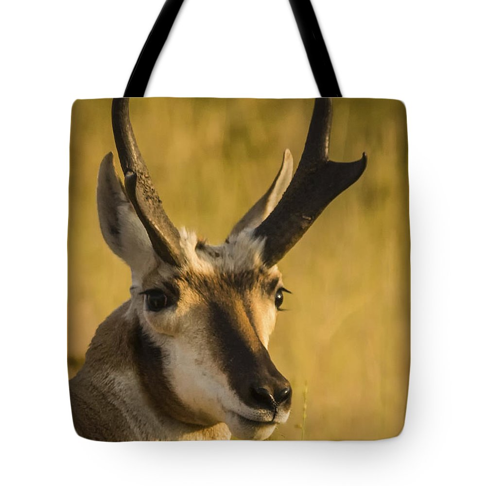 Antelope Tote Bag featuring the photograph Handsome Is by Albert Seger