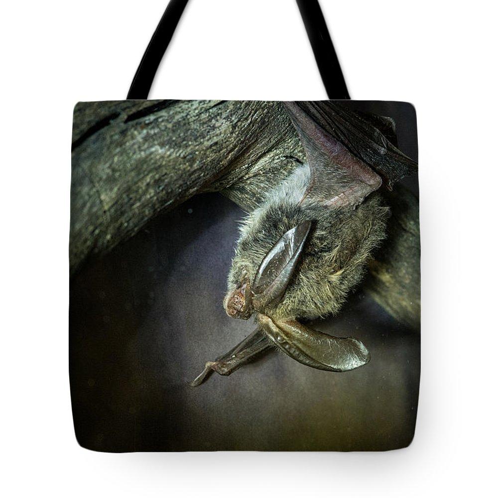 Bat Tote Bag featuring the photograph Hanging Big Eared Bat by Douglas Barnett