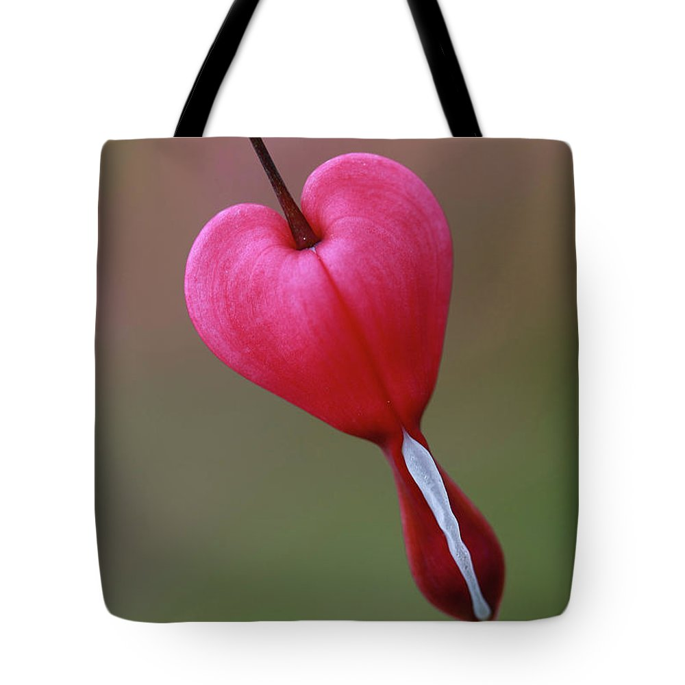 Bleeding Heart Tote Bag featuring the photograph ...hanging On by Martina Schneeberg-Chrisien