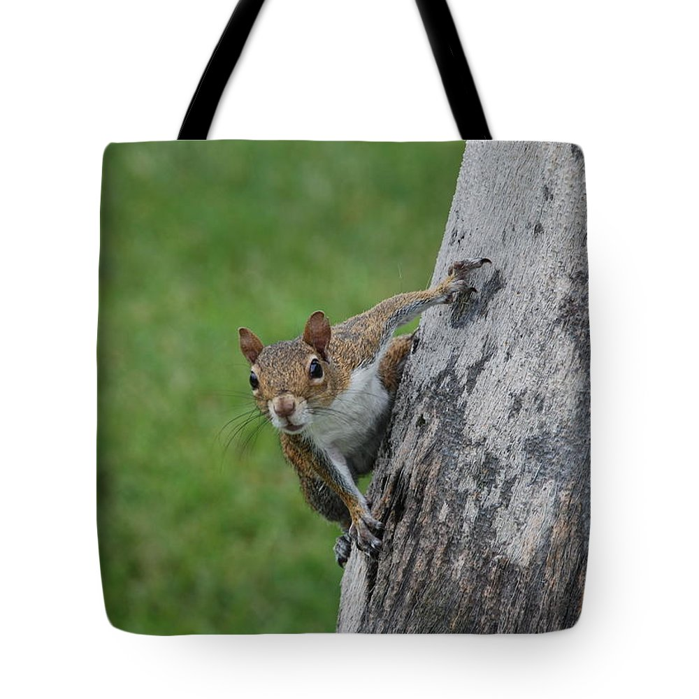 Squirrel Tote Bag featuring the photograph Hanging On by Rob Hans
