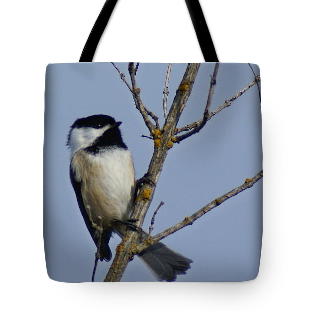 Birds Tote Bag featuring the photograph Hanging Out by Ben Upham III