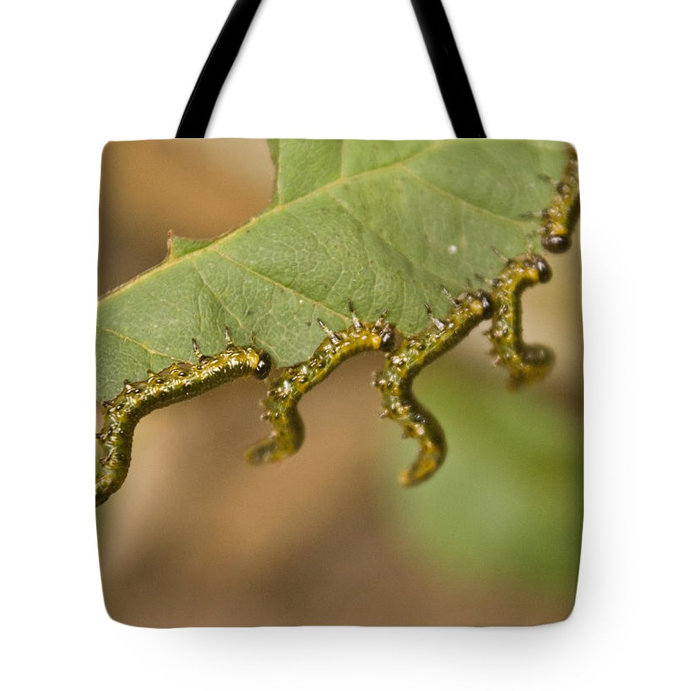 Larvae Tote Bag featuring the photograph Hanging There by Douglas Barnett