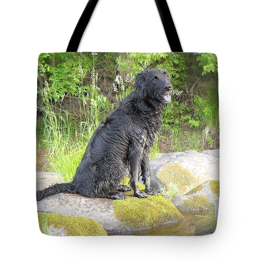 Mississippi River Tote Bag featuring the photograph Happy Happy Dog At Dawn by Kent Lorentzen