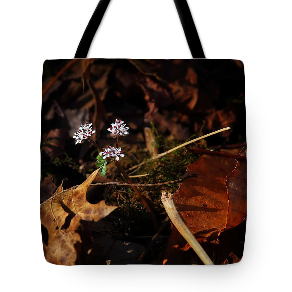 Harbinger Of Spring Tote Bag featuring the photograph Harbinger Of Spring In Lost Valley by Michael Dougherty