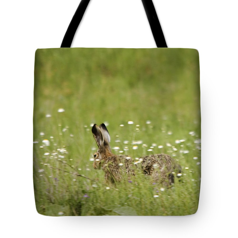 Hares Tote Bag featuring the photograph Hare On The Run by Cliff Norton