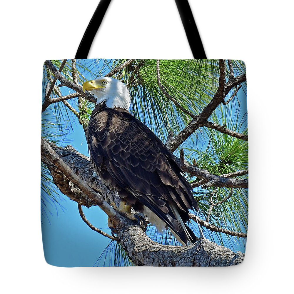 Eagles Tote Bag featuring the photograph Harriet Beauty by Liz Grindstaff