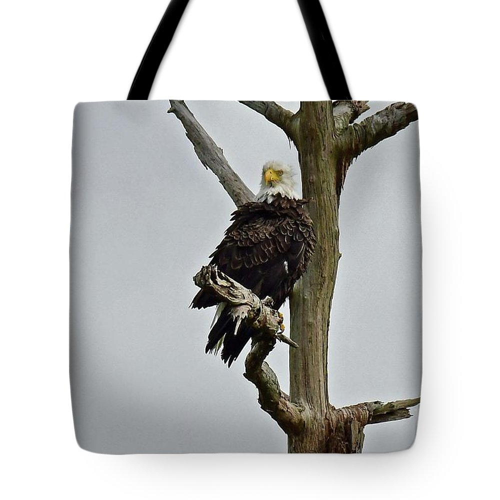 Tote Bag featuring the photograph Harriet Look by Liz Grindstaff