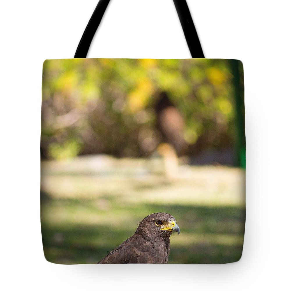 Animals Tote Bag featuring the photograph Harris Hawk Looking At Infinity by Seb Estrada