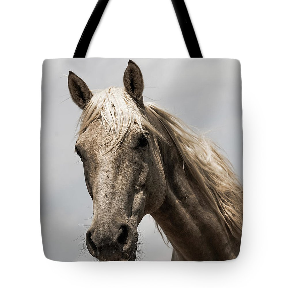 Tote Bag featuring the photograph Harry's Gold by Kate Wiltshire