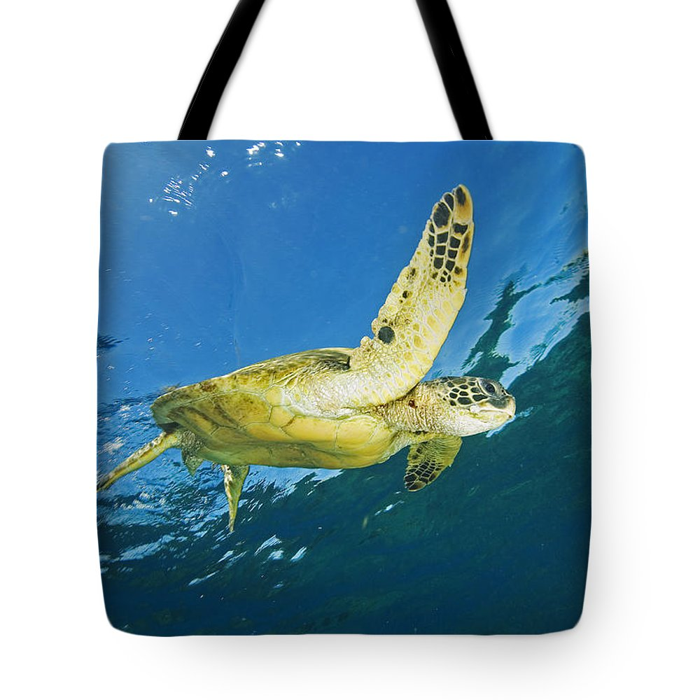 Animal Art Tote Bag featuring the photograph Hawaii, Green Sea Turtle by Ron Dahlquist - Printscapes