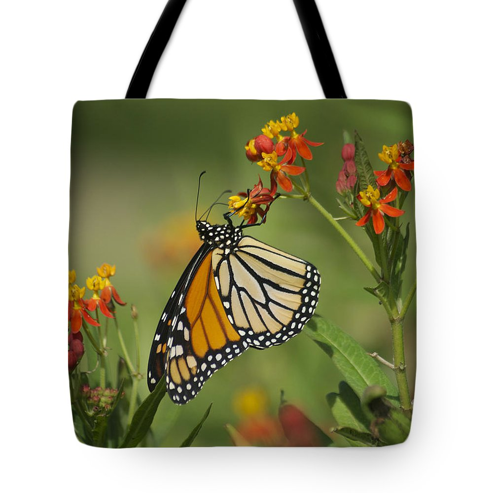 Wildlife Tote Bag featuring the photograph Hawaiian Monarch 2 by Michael Peychich