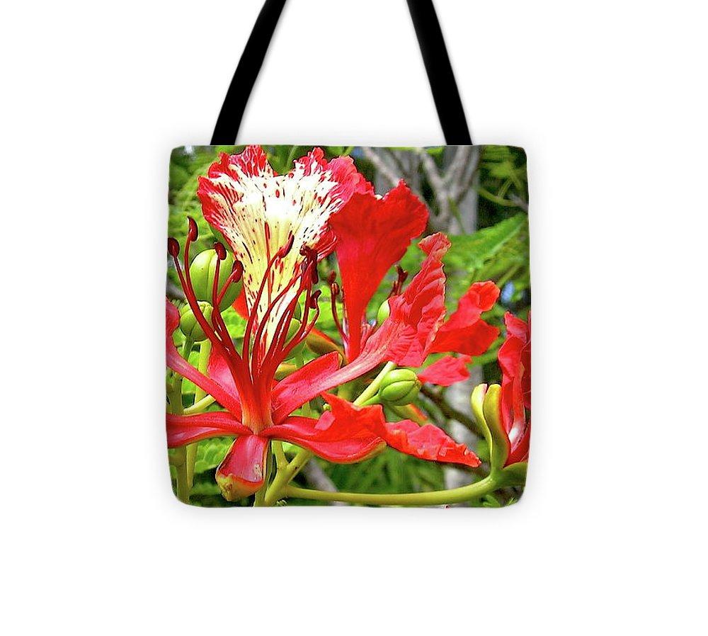 Royal Ponciana Tote Bag featuring the photograph Hawaiian Royal by James Temple