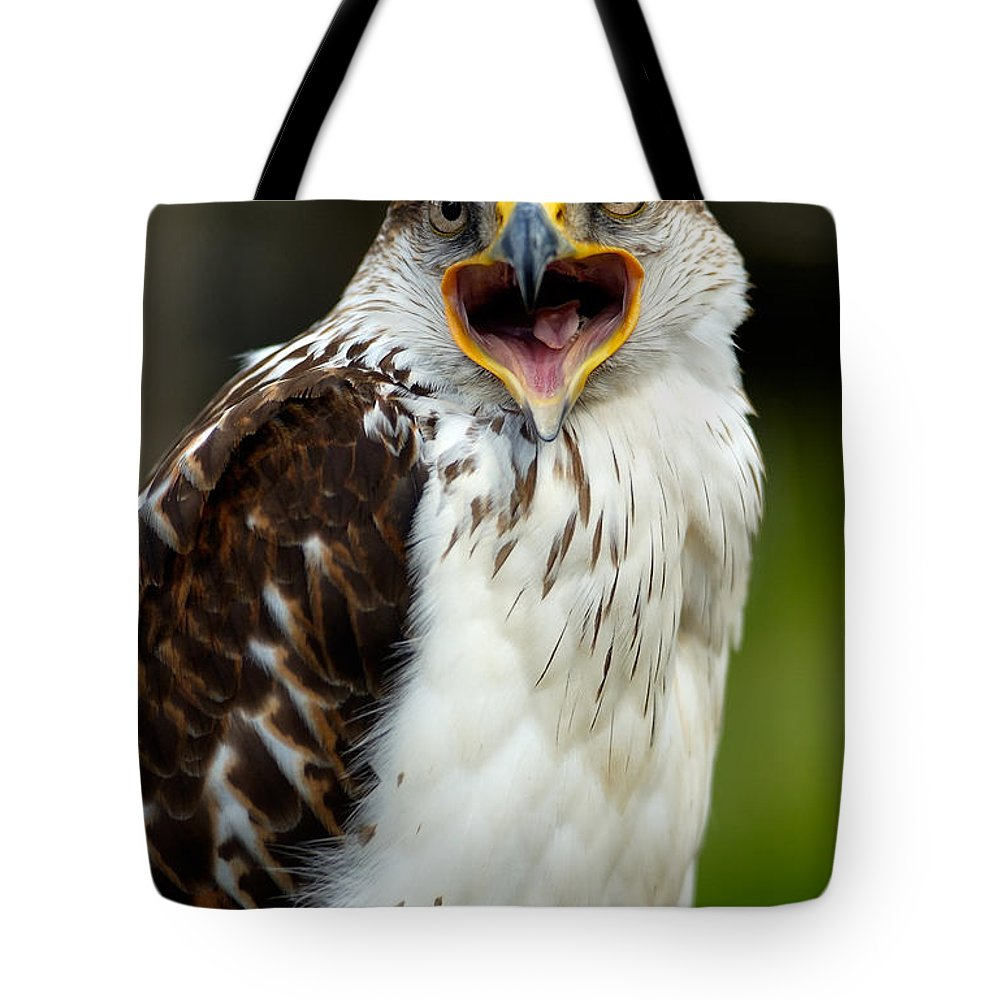 Hawk Tote Bag featuring the photograph Hawk by Doug Gibbons