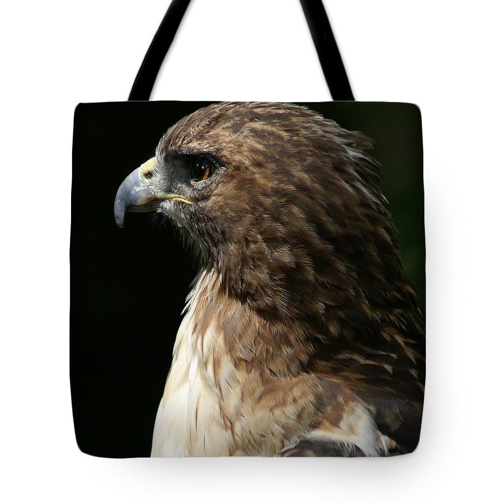 Hawk Tote Bag featuring the photograph Hawk Portrait by Heather Coen