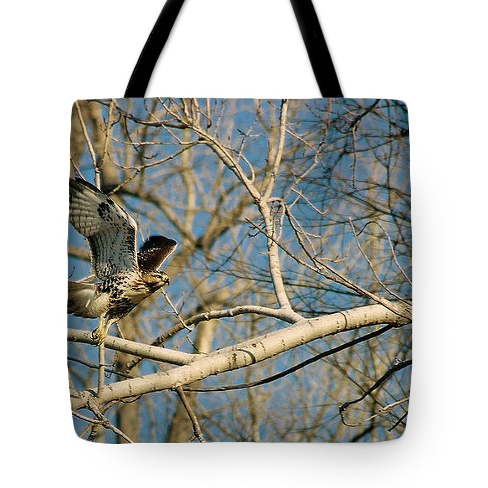 Hawk Tote Bag featuring the photograph Hawk by Steve Karol