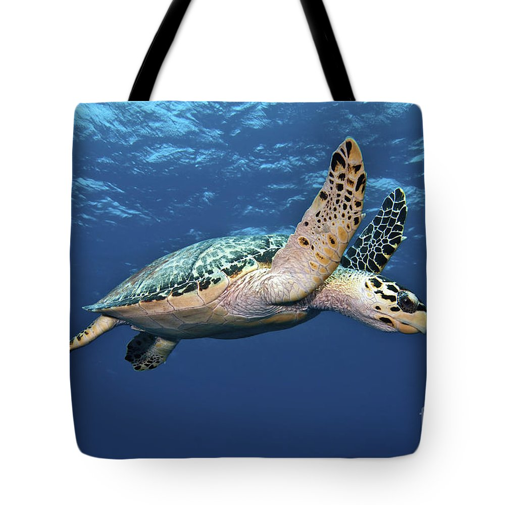 Caribbean Tote Bag featuring the photograph Hawksbill Sea Turtle In Mid-water by Karen Doody