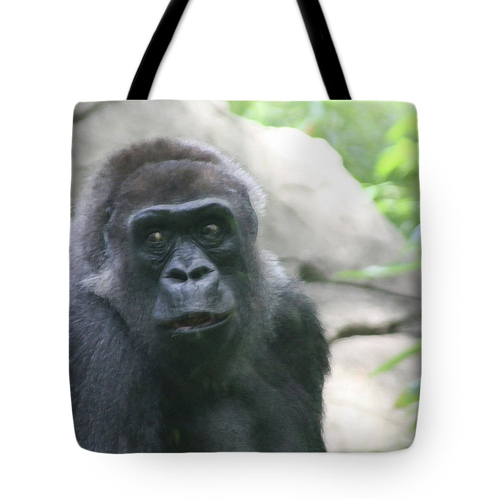 Primate Tote Bag featuring the photograph He Is Watching by Karol Livote