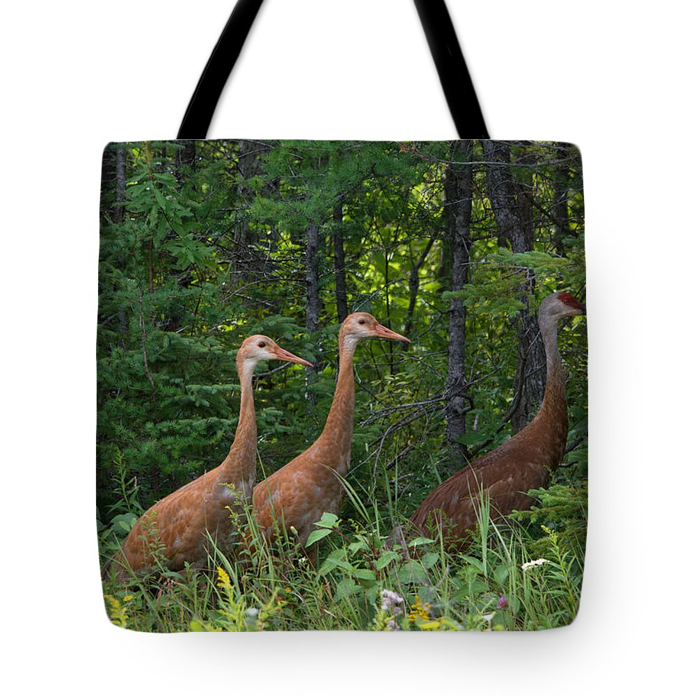 Seney National Wildlife Refuge Tote Bag featuring the photograph Headed For The Woods by Linda Kerkau