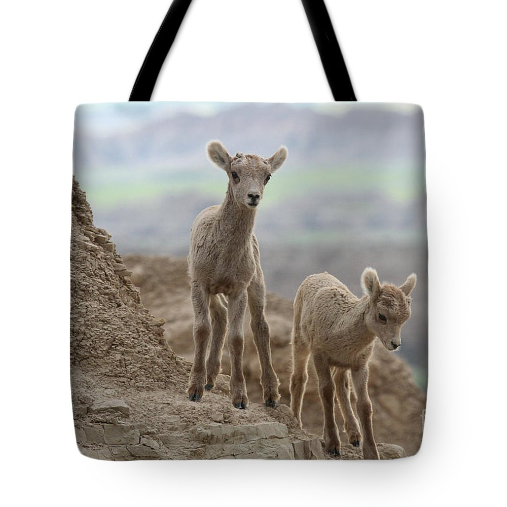 Big Horn Tote Bag featuring the photograph Heading Down by Adam Jewell