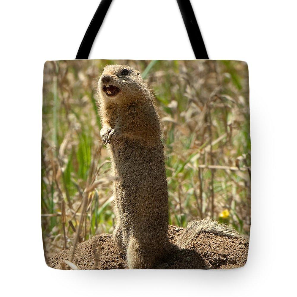 Prairie Dog Tote Bag featuring the photograph Hear Ye Hear Ye by Martha Moore