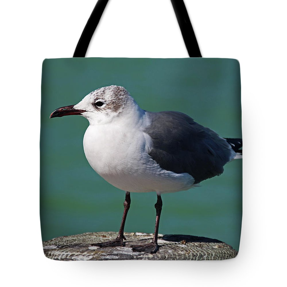 Seagull Tote Bag featuring the photograph Hearing Voices by Michiale Schneider