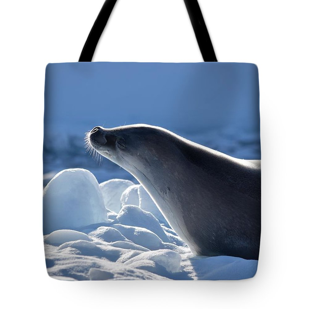 Seal Tote Bag featuring the photograph Heaven by Chris Hanlon