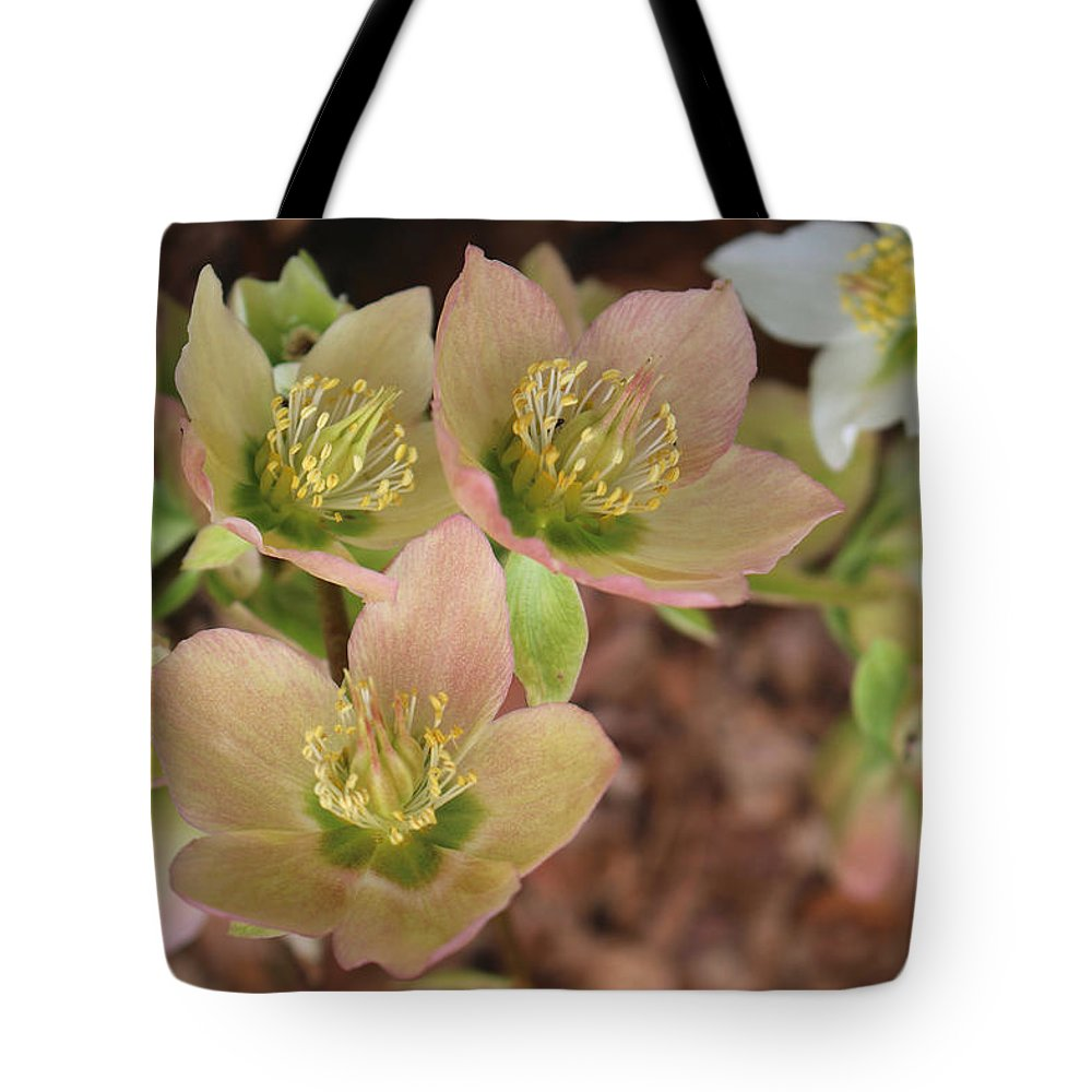 Hellebores Tote Bag featuring the photograph Heavenly Hellebores by Living Color Photography Lorraine Lynch