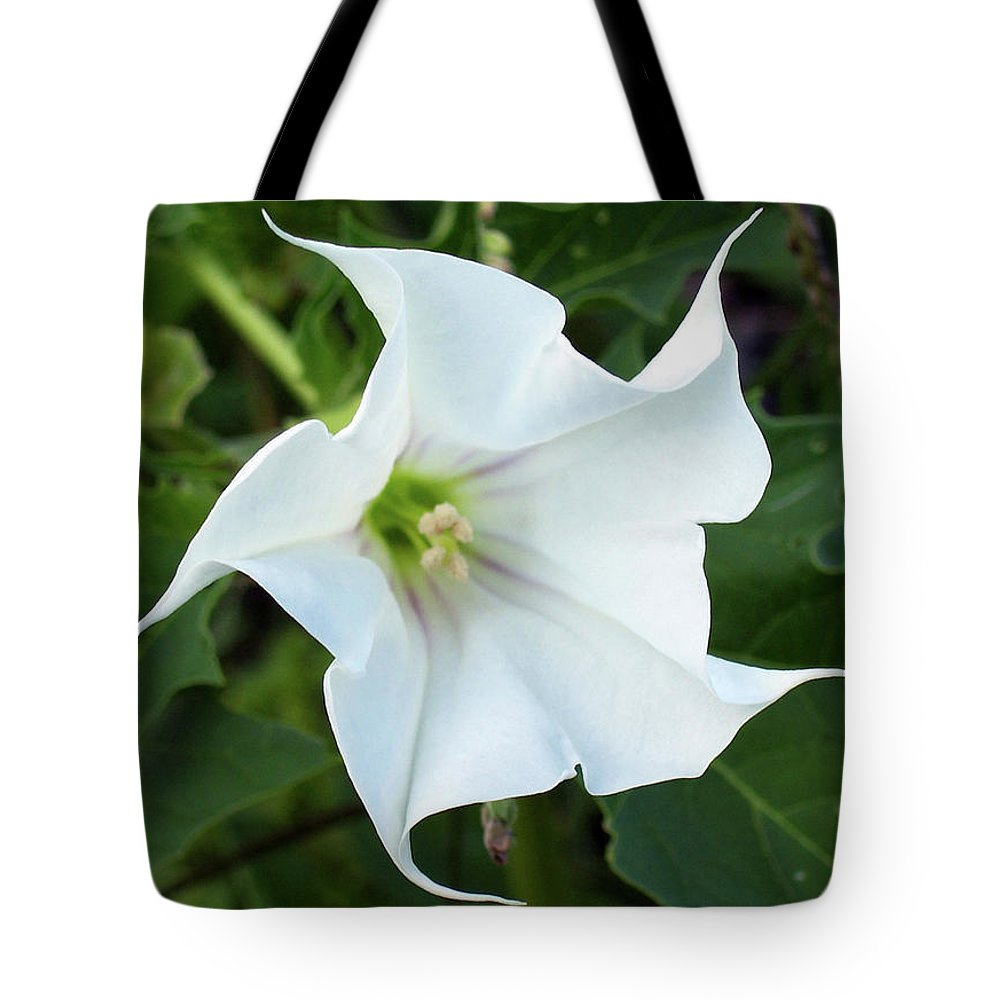 Flora Tote Bag featuring the photograph Hedgebind by Laura Wright