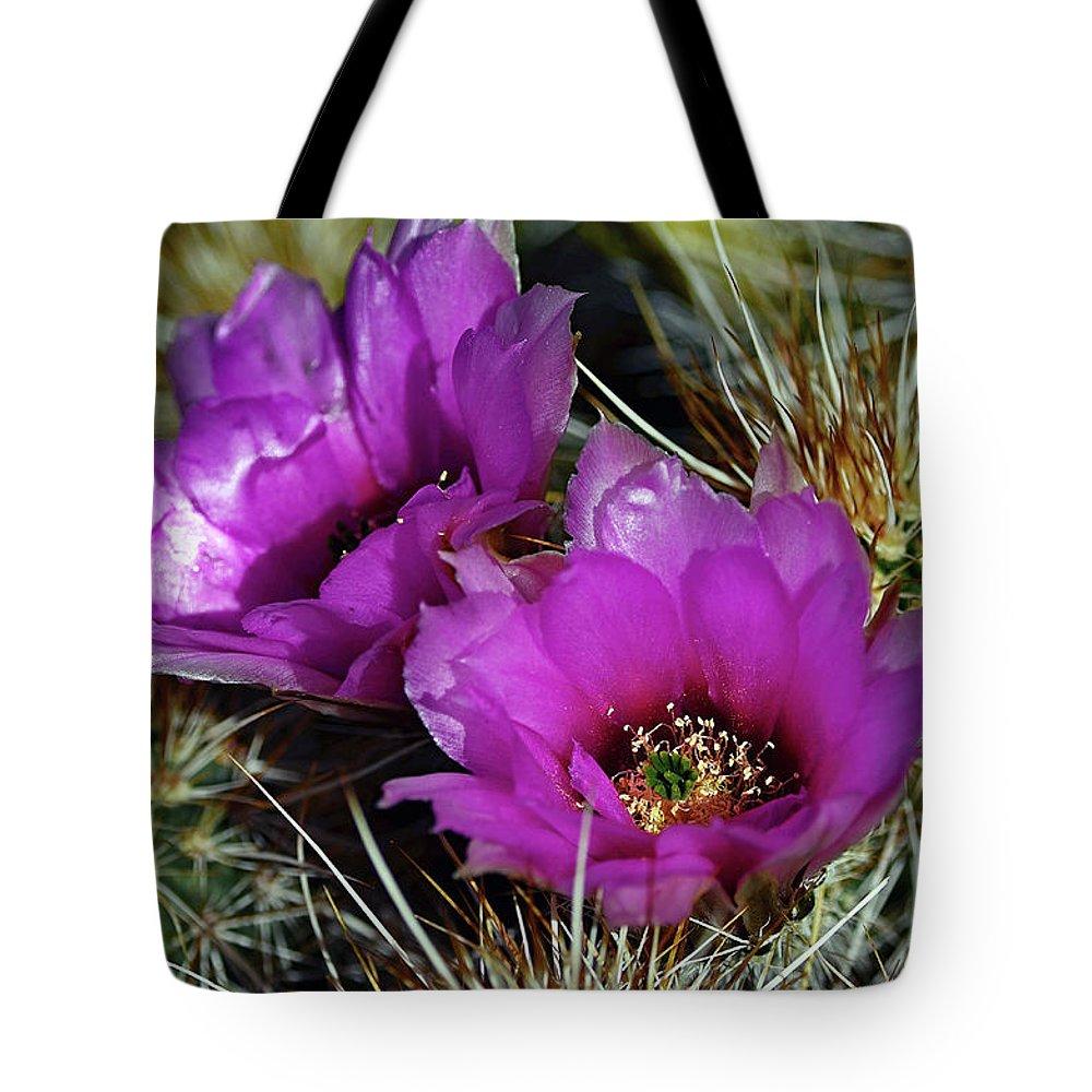 Hedgehog Cactus Tote Bag featuring the photograph Hedgehog Morning by Hazel Vaughn