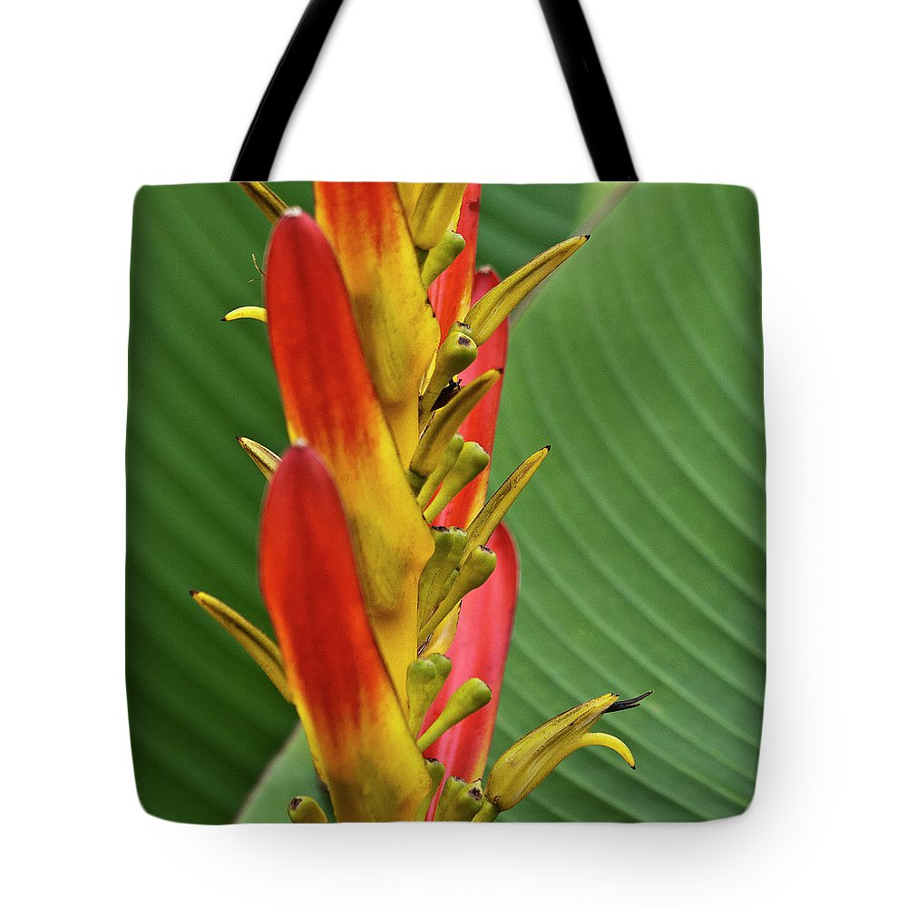 Heliconia Tote Bag featuring the photograph Heliconia by Heiko Koehrer-Wagner