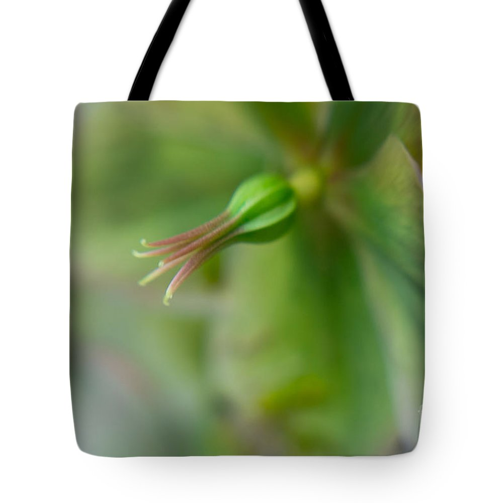 Flora Tote Bag featuring the photograph Hellibore 2 by Jill Greenaway