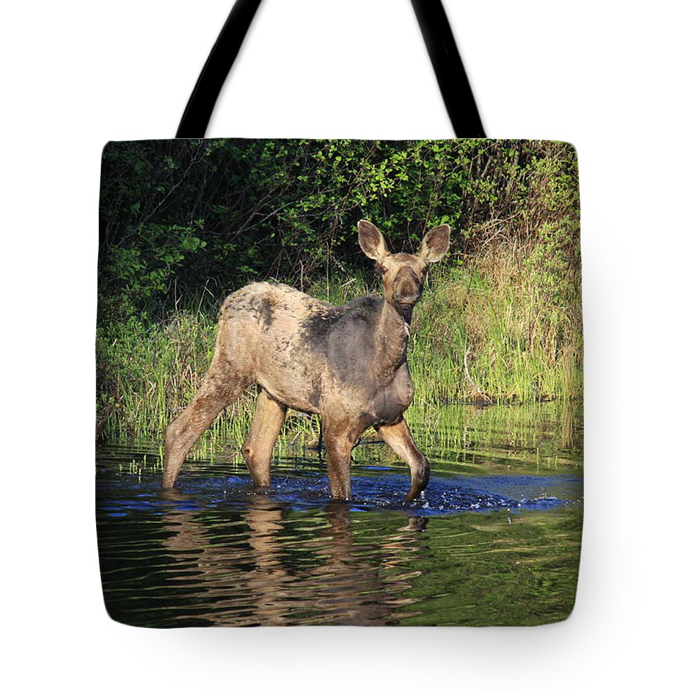 Moose On The Gunflint Trail Tote Bag featuring the photograph Hello There by Joi Electa