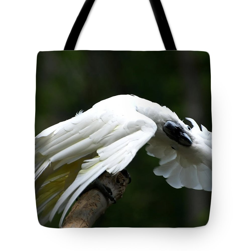 Ann Keisling Tote Bag featuring the photograph Hellooooo There by Ann Keisling