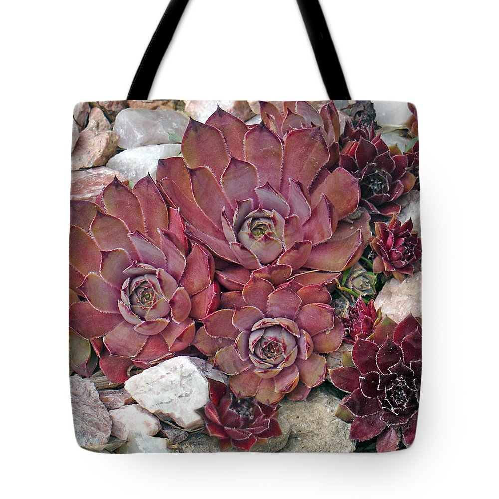 Landscape Tote Bag featuring the photograph Hens And Chickens by Steve Karol