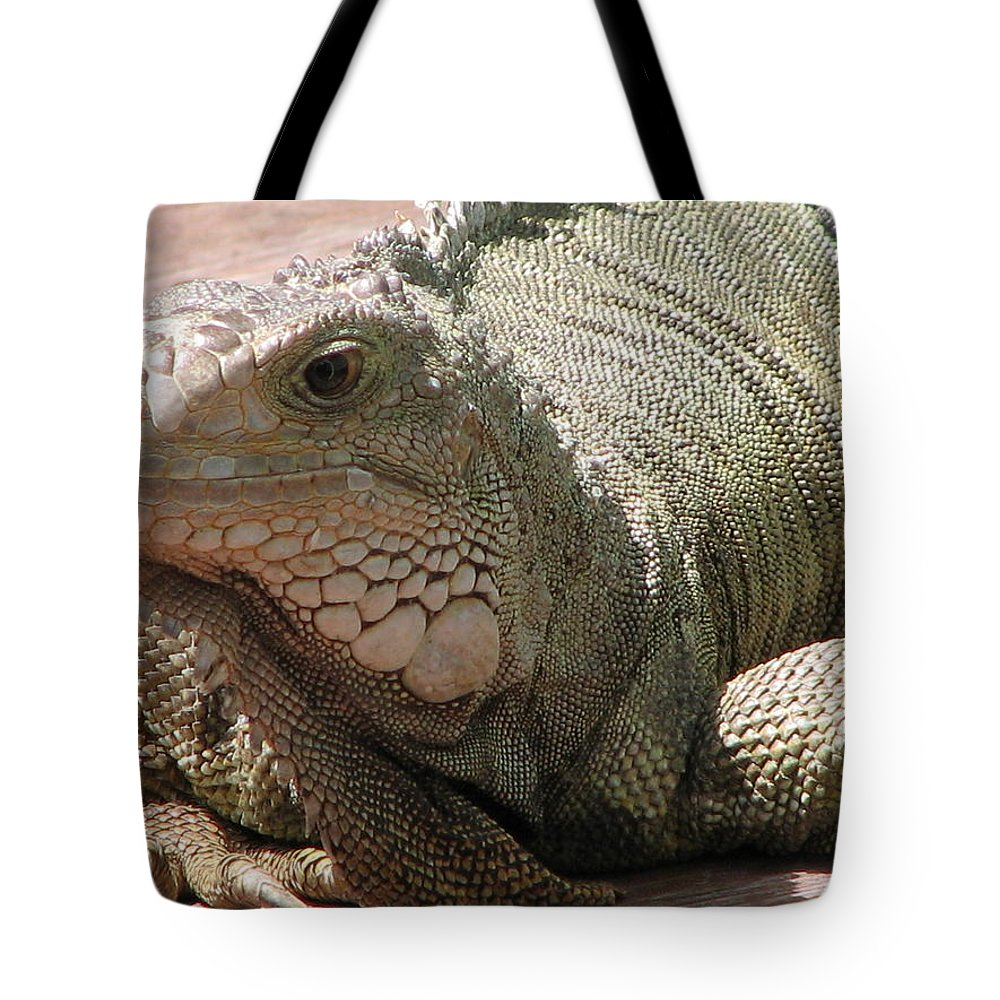 Iguana Tote Bag featuring the photograph Here Leezard Leezard by Stacey May