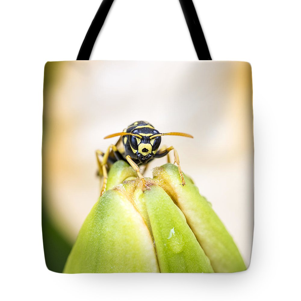 Insect Tote Bag featuring the photograph Here's Looking At You by Cathy Kovarik