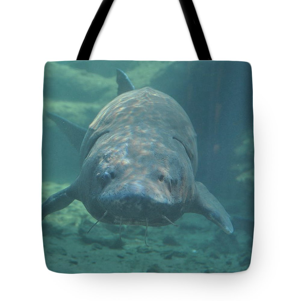 Fish Tote Bag featuring the photograph Herman The Sturgeon by Rich Bodane