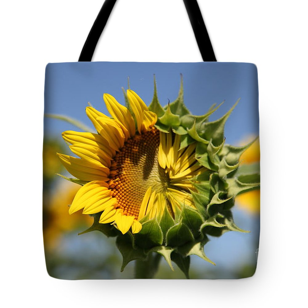 Sunflowers Tote Bag featuring the photograph Hesitant by Amanda Barcon